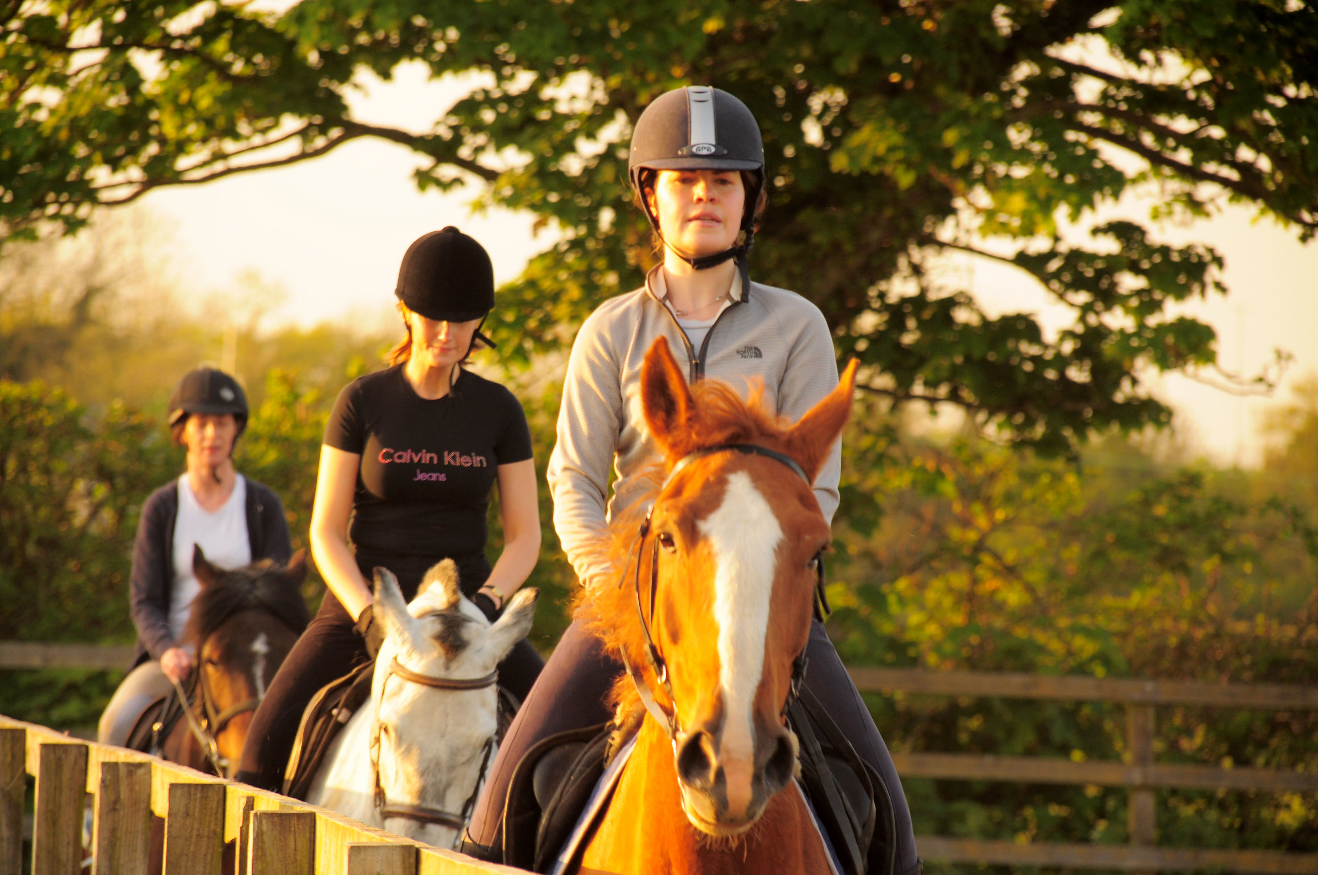 About Adult horse lesson riding